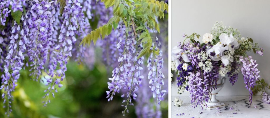Wisteria flower arrangements